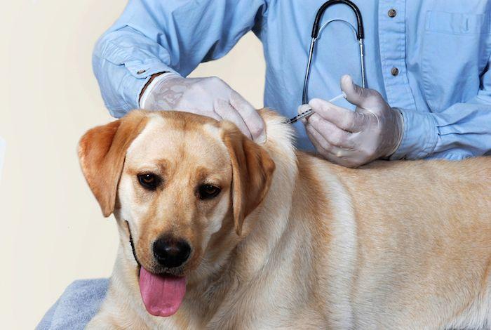 La importancia de las vacunas para mascotas