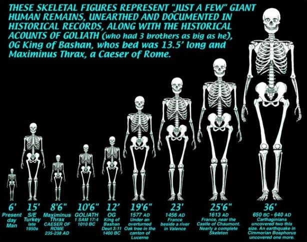 8 best ice age images on pinterest | human skeleton, ice age and, Skeleton