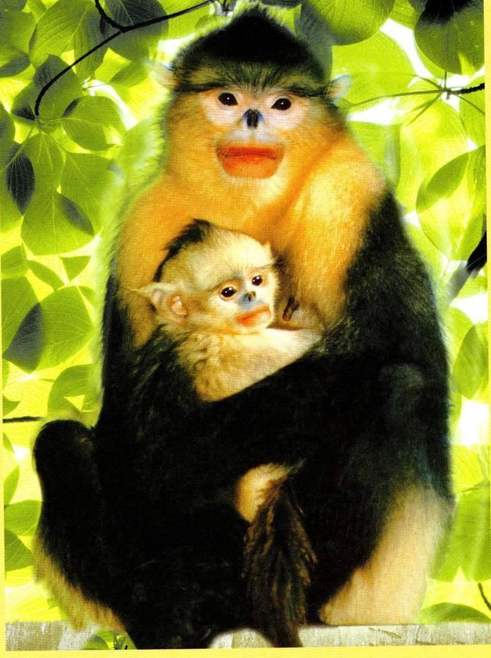 Fabulous China us golden monkey