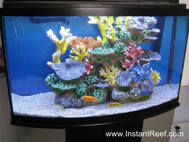 46 gallon african cichlid aquarium with freshwater fish for 55 gallon aquarium decoration ideas