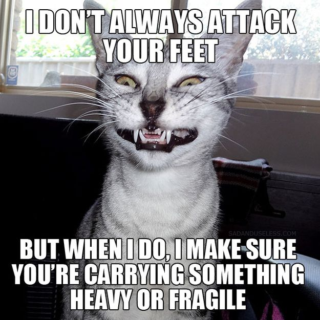 I HATE CATS, but this is too funny not to post Haa-Ha!!