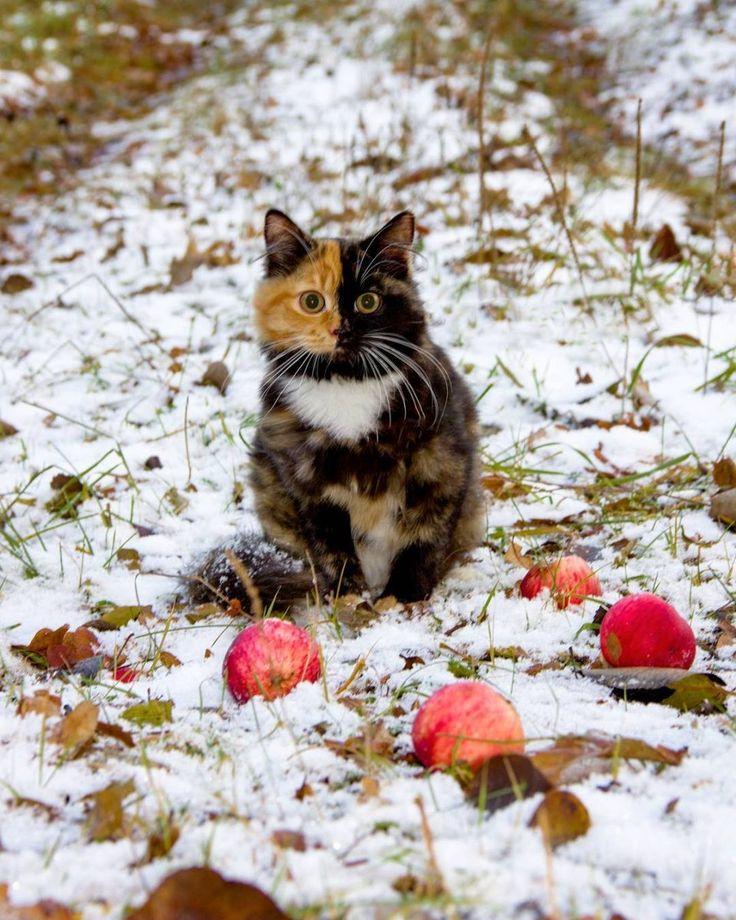 Yana le chat qui concurrence Venus