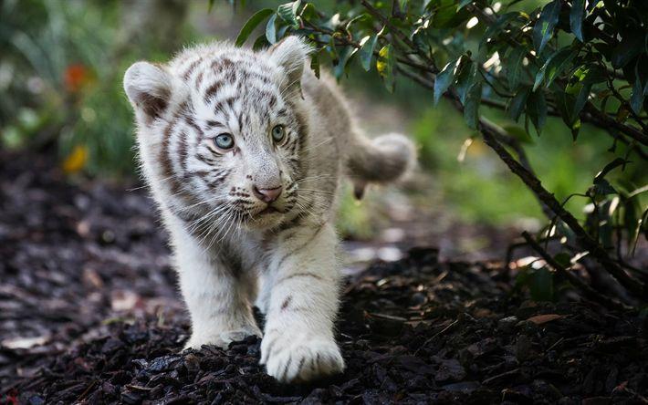 Herunterladen hintergrundbild bengal tiger, niedliche tiere, cub, panthera tigris tigris, indischen tiger, raubtiere
