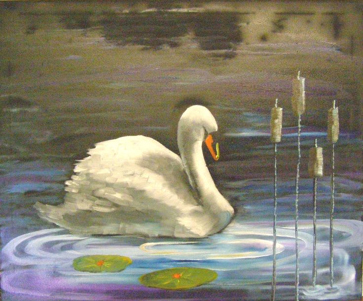 Swan In Bull Rushes 50 x 60 cm oil on canvas