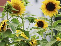 I TRÄDGÅRDSDESIGN FLORA får du kunskaper och färdigheter i växtkomposition och i att inreda och designa trädgårdsmiljöer som följer olika stilar och teman. http://trga.se/utbildning/tradgardsdesign-flora/