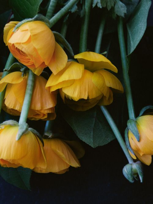 Nothing is so cheery in winter as yellow flowers.
