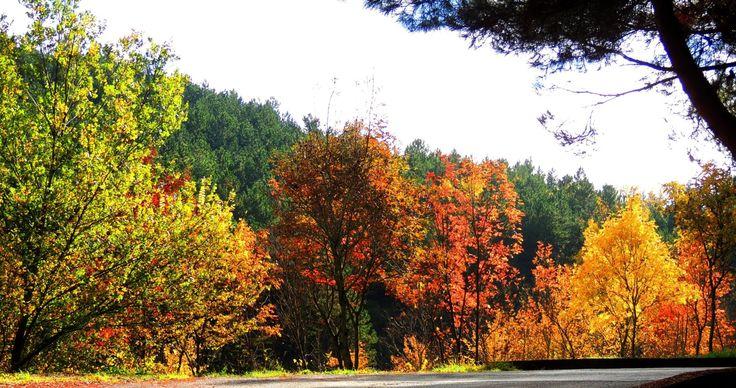 lucania autumn wallpaper 4k ultra hd wallpaper