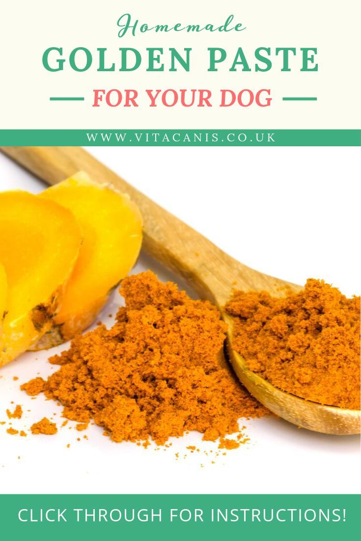 Blog Fall Breeze And Autumn Leaves Blog Healthy Dog Food