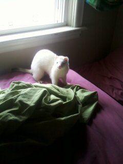 White Ferret, Theo <3