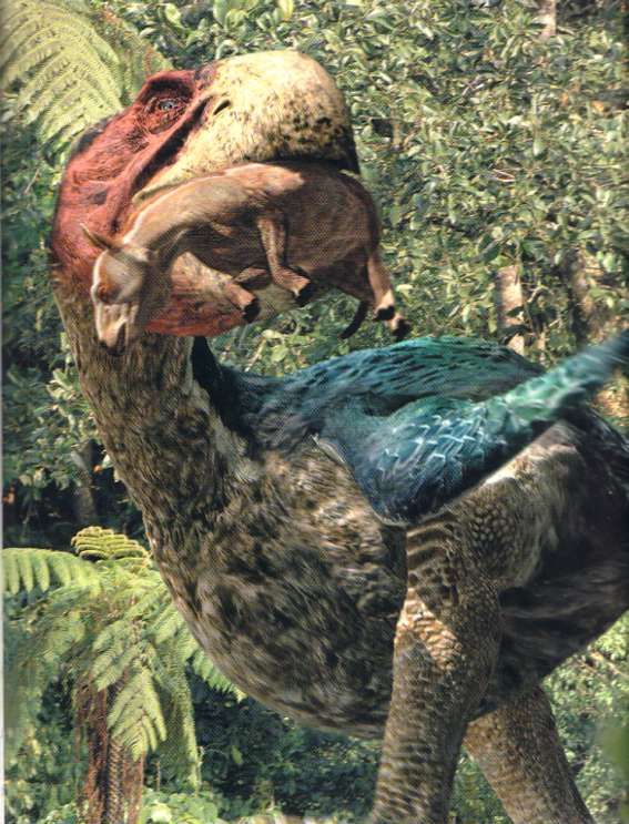 Gastornis, also known as Diatryma, was a prehistoric neognath bird. It was smaller and more robust than the terror bird featured in Sabre Tooth; it lived 56-41 MYA, during the Paleocene and the early Eocene. Strangely, it's been questioned whether this animal was a herbivore or a carnivore or even an omnivore. In 2014, The body structure of gastornis fossils led scientists to classify gastornis as a herbivorous animal. These were the largest of birds in the Eocene. Half a ton of feather a...