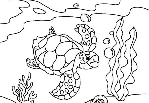 Sea Turtle Sea Turtle Diving Coloring Page Online Coloring