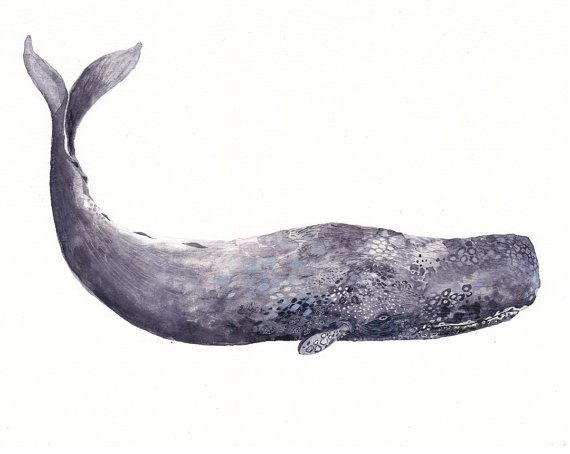Ancient Sperm Whale  Large Archival Print by unitedthread on Etsy, $40.00
