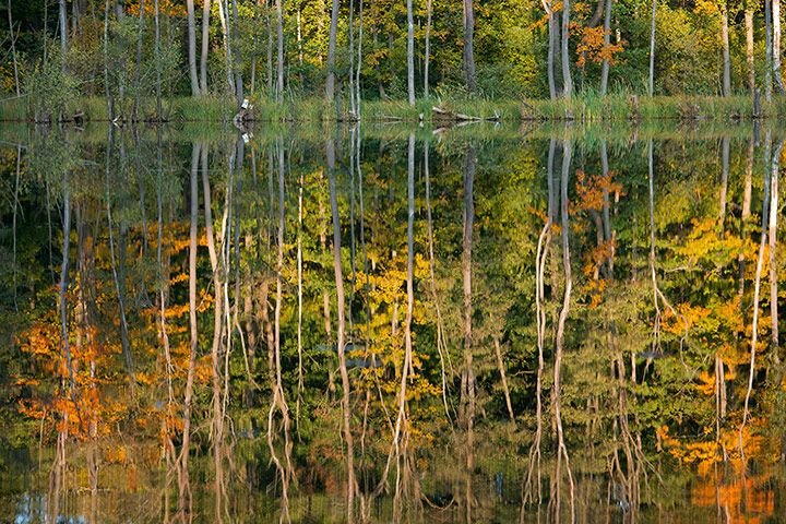 Autumn has to be painted! Credit: Patrick Pleul/AFP/Getty Images Trees reflect in the Trepliner See lake near Treplin, eastern Germany