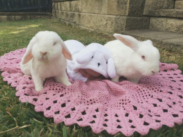 Aww, as if this isn't the cutest thing. 3 bunny rabbits.