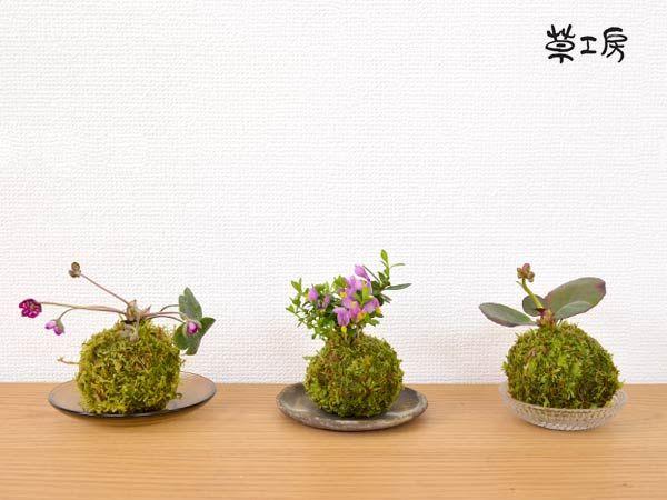 【楽天市場】苔玉  赤花ヒマラヤ雪の下 天然 ハイゴケ 盆栽 農園 直送 緑 観葉 観葉植物 コケ玉 こけだま コケダマ ミニ 盆栽 mossboll:Rocca-clann