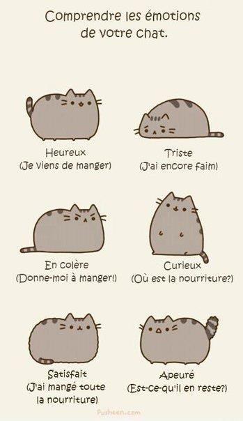 Comprendre les émotions de votre chat.