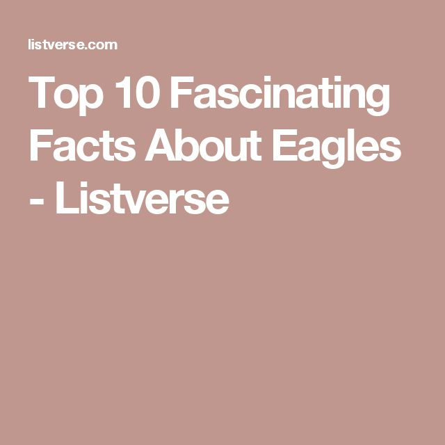 Top 10 Fascinating Facts About Eagles - Listverse