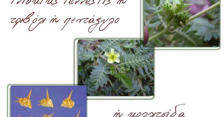 βότανα και υγεία,botanologia,βοτανολογία,βότανα,τριχόπτωση,αδυνάτισμα,βότανα