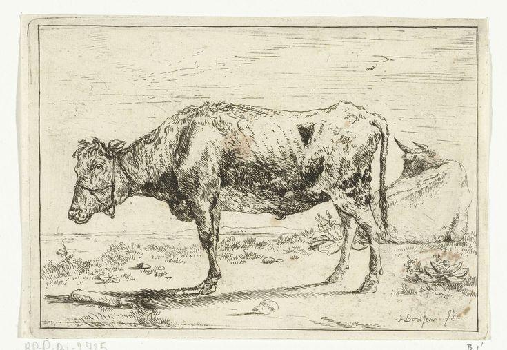 Anthonie van Borssom | Koe met halster, Anthonie van Borssom, 1639 - 1677 | Twee koeien. Een koe met halster staat in de lengte met zijn hoofd naar links. De andere koe ligt in de wei met zijn rug naar de kijker.