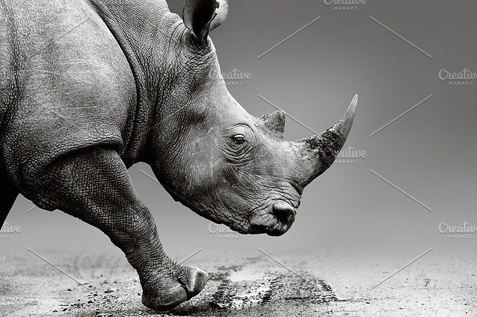 Rhino close up in Africa by Etienne & Yolandi Outram on @creativemarket