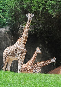 NC Zoo- Now the Nation's Largest!! Take the family up to Ashboro and discover more than 1100 animals!