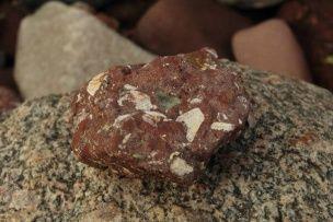 О природе уникальных экзотических месторождений урана и редких земель В юго-восточной части месторождения также нередко встречаются целые скелеты древних китов (рис. 7) размером до 3-4 м и деформированные (сплюснутые) обугленные стволы деревьев (до 6-8 м), которые обычно залегают в подошве костной брекчии или перекрывают её, реже они наблюдаются внутри залежи на размытой поверхности вышележащих пластов (рис. 8). Попутно заметим, что обнаруженные автором в подошве залежи скелеты древних к