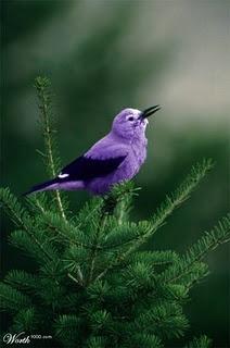bedroomShades Of Purple, Purple Birds, Little Birds, Colors, Purple Passion, Pretty Birds, Beautiful Birds, Animal, Feathers Friends