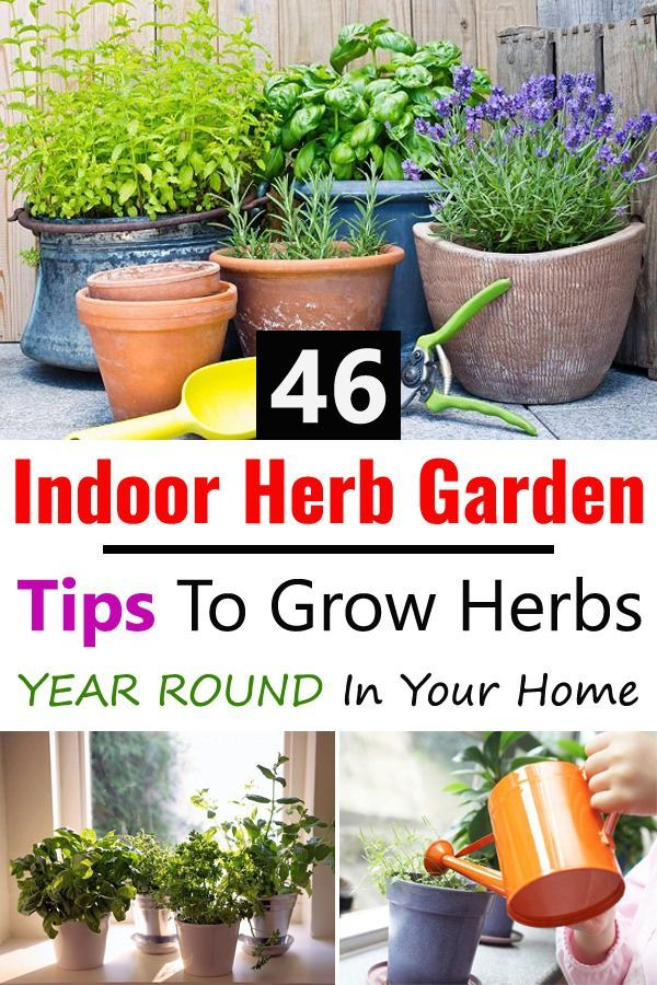 46 Indoor Herb Garden Tips To Grow Herbs Year Round In Your Home