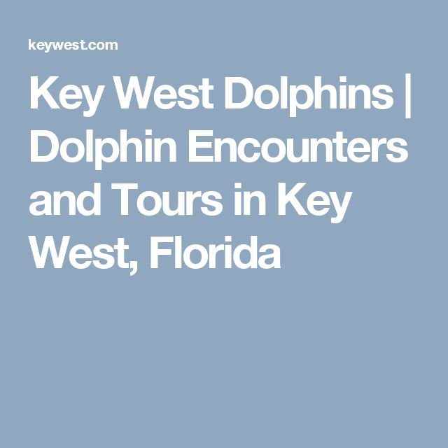 Key West Dolphins | Dolphin Encounters and Tours in Key West, Florida