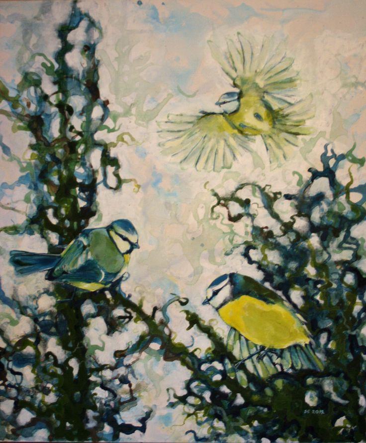 Blåmeis - Sissel Endresen - Blue tit - birds - nature