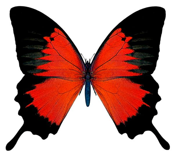 Black and Red Butterfly PNG Picture