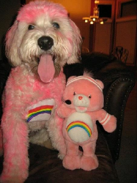 Care Bear Dog Costume