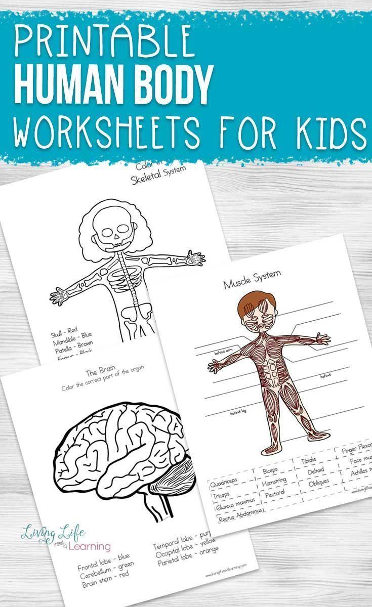 Human Body Worksheets For Kids Human Body Worksheets Human Body Homeschool Human Body Systems [ 1200 x 735 Pixel ]