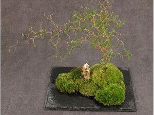 L'art du kokedama est apparu au Japon au début des années 1990. Ces petites boules de mousse sur lesquelles s'épanouissent des plantes ont immédiatement connu le succès et l'on commence désormais à en trouver en France. Raffinés et relativement faciles d'entretien, les kokedamas ont tout pour nous séduire.