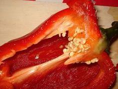 Trucs et astuces pour faire pousser des graines de poivron sur son balcon ou sa terasse( faire des plants de poivron) .Atelier jardinage à l'école maternelle pour les enfants par caboucadin.