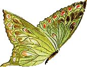 GIF papillon, images Gifs papillon - butterfly gif animated