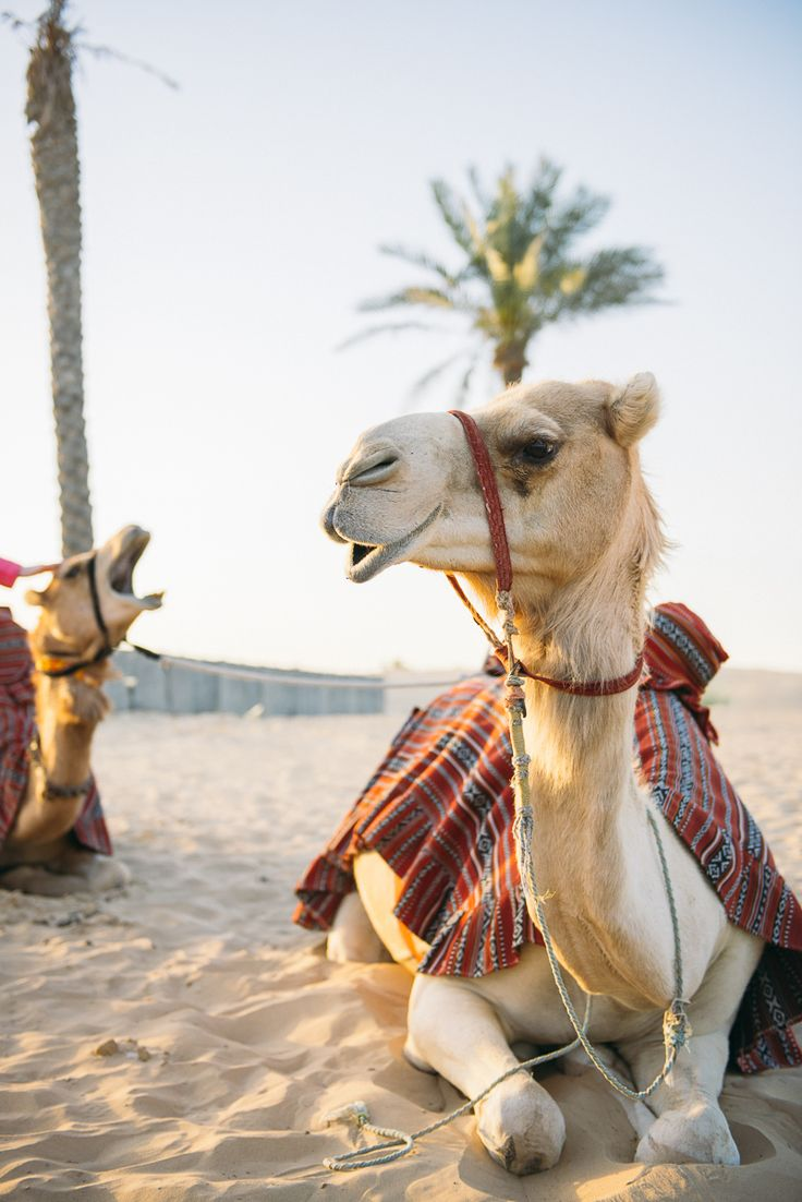 Search 'Dubai' on  Isango,com to find great tours and experiences, Including summer camel safari's and many more!