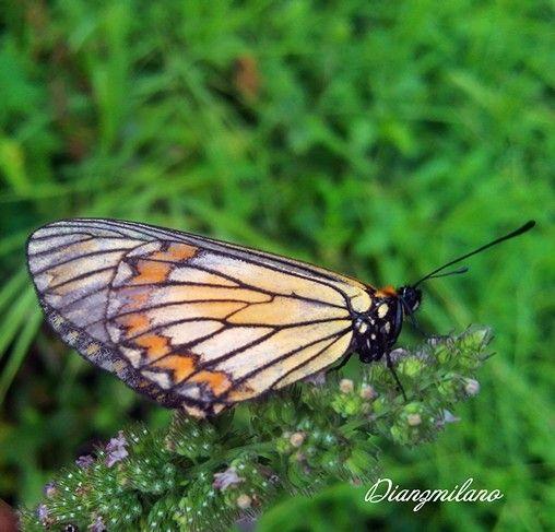 Butterfly enjoy