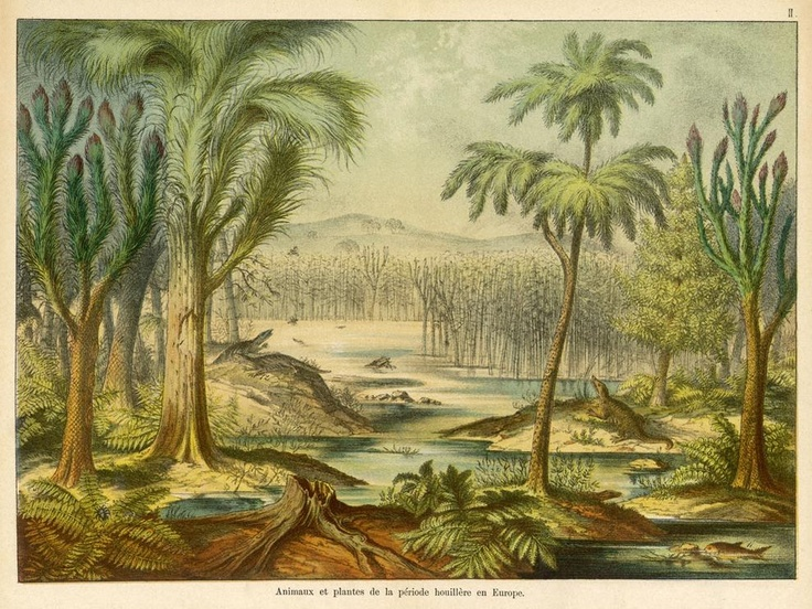 Prehistoric Plants Alive Today 170 best images about ...