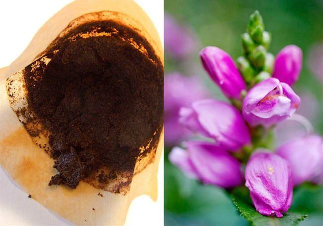 Sverige dricker näst mest kaffe i hela världen, nästan 3,5 koppar per person om dagen. Det betyder enorma mängder kaffesump som bara slängs bort. Helt i onödan! Visste du att kaffesumpen exempelvis kan ge finare blommor?