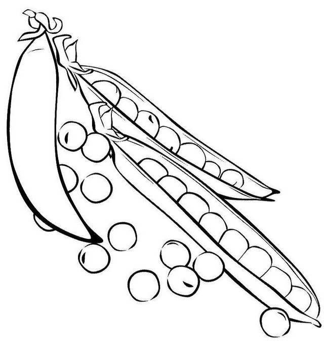 Pin Oleh Illustration Designer Di Peas Coloring Pages Vegetables