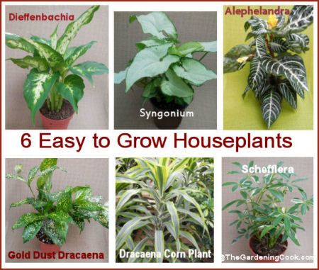 115 Best Images About Gardening Houseplants On Pinterest