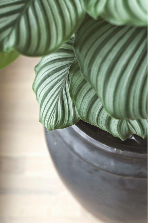 www.thewhitebox.no  Scandinavian interior design. Tine K Home plant pot.