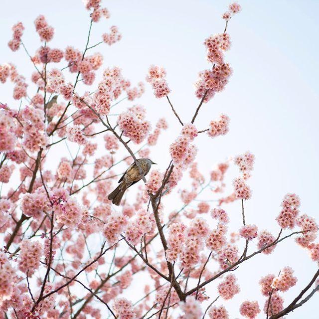 【crystallynnphotography】さんのInstagramをピンしています。 《new blog post from our day at the Tokyo Imperial Palace  link in profile ⛩ #tokyo #japan #crystallynncollins #mytinyatlas  #afar #traveldeeper #letsgosomewhere #travel #wanderlust #wanderfolk #livefolk