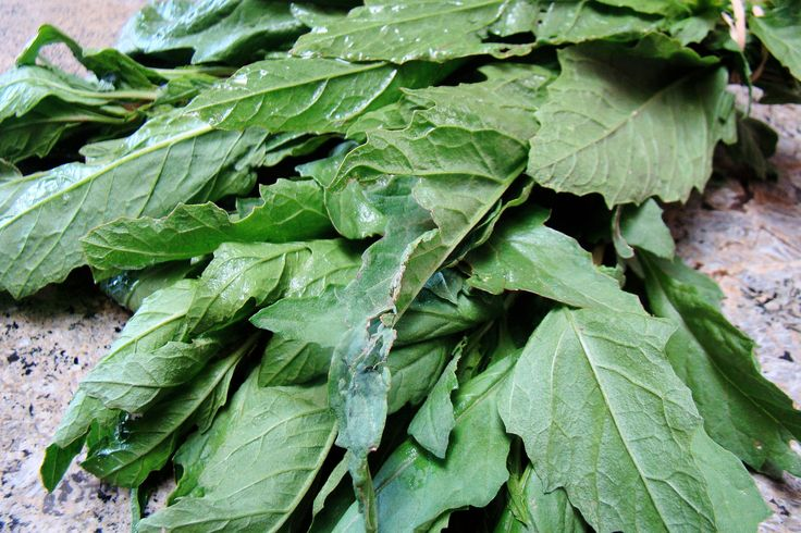 Learn what this essential Mexican cooking/medicinal herb is used for, what it looks like, where to get it, origin of/synonyms for the Mexican term Epazote.