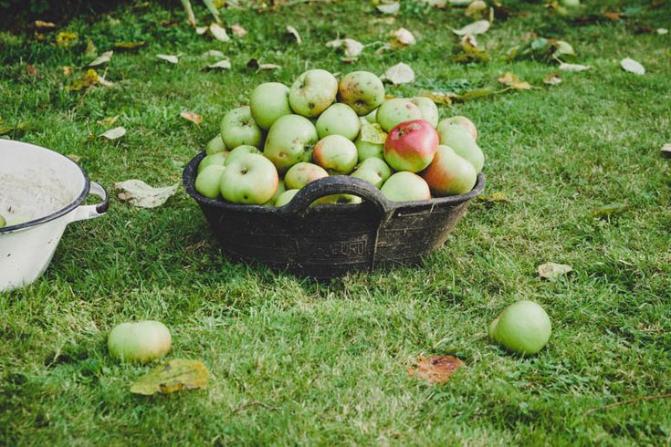 13. How Does Your Garden Grow? Apples!