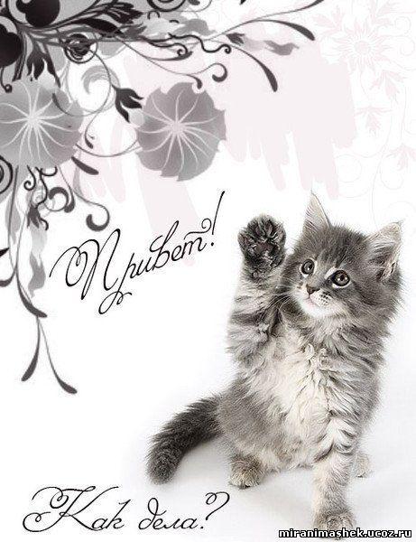 Картинка с котиком как дела