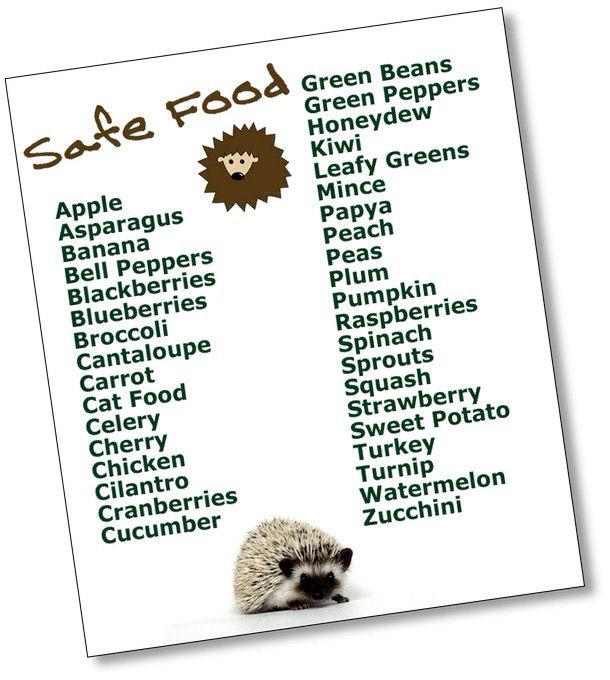 Know your hedgehog food!