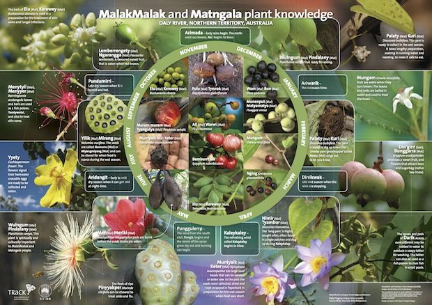 MalakMalak and Matngala Seasonal Calendar (Daly River, NT) - plant knowledge