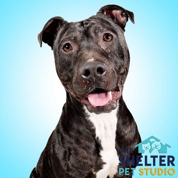 Pets For Adoption Petfinder In 2020 Pet Adoption Pets Adoption